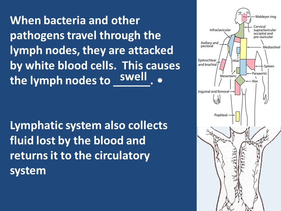 When bacteria and other pathogens travel through the lymph nodes, they are attacked by white blood cells. This causes the lymph nodes to ______. Lymph
