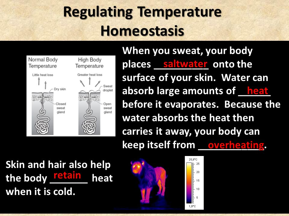Skin and hair also help the body _______ heat when it is cold. When you sweat, your body places __________ onto the surface of your skin. Water can ab