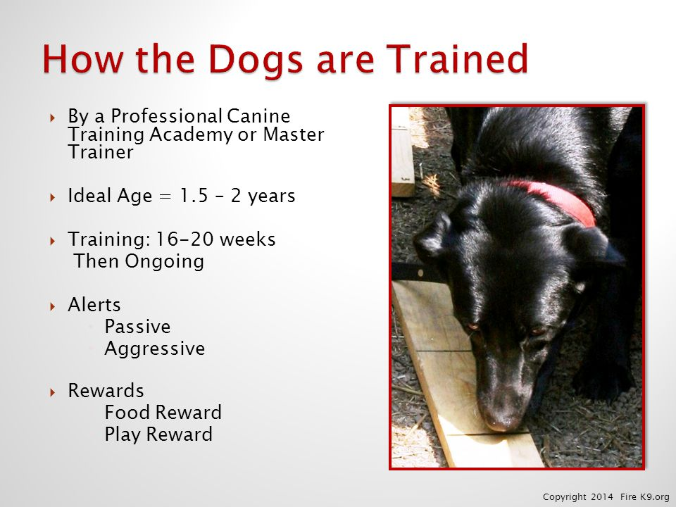  By a Professional Canine Training Academy or Master Trainer  Ideal Age = 1.5 – 2 years  Training: 16-20 weeks Then Ongoing  Alerts  Passive  Ag