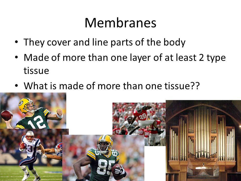 Membranes They cover and line parts of the body Made of more than one layer of at least 2 type tissue What is made of more than one tissue??