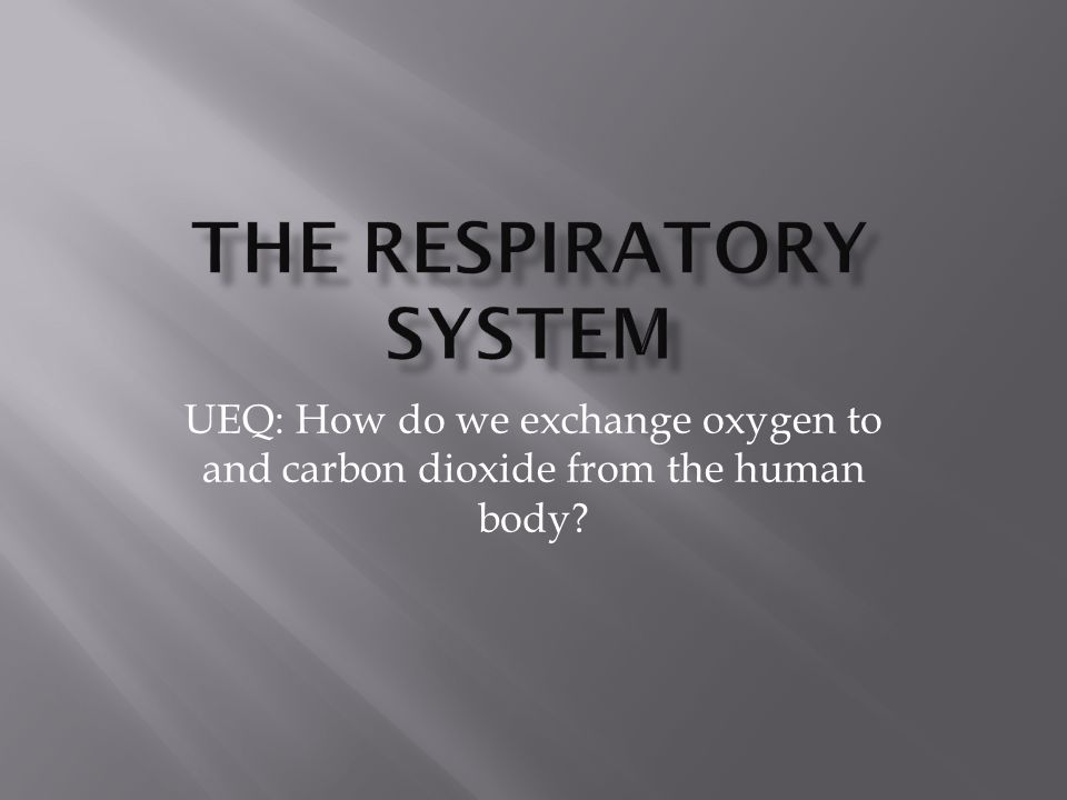  The system that  brings oxygen into the body and expels carbon dioxide out of the body.
