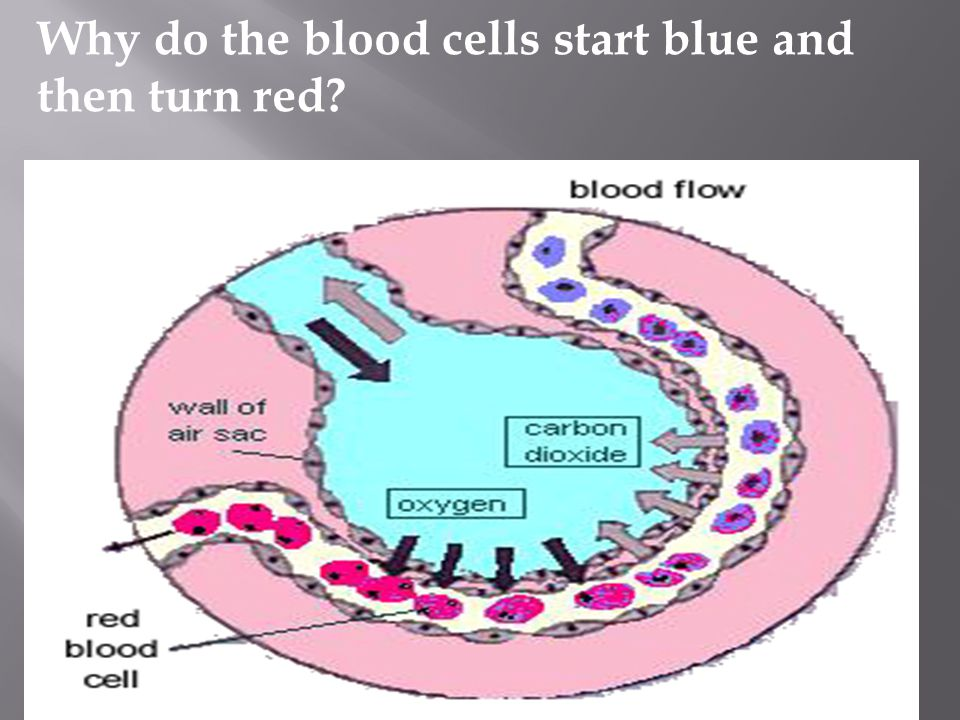 Why do the blood cells start blue and then turn red?