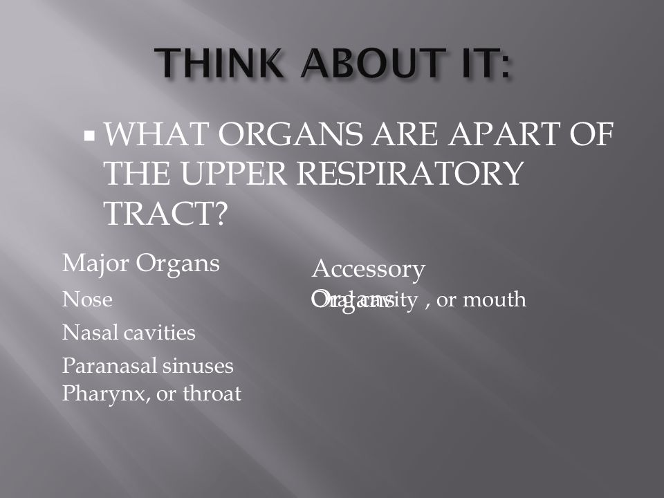  WHAT ORGANS ARE APART OF THE UPPER RESPIRATORY TRACT? Nasal cavities Pharynx, or throat Major Organs Accessory Organs Oral cavity, or mouthNose Para