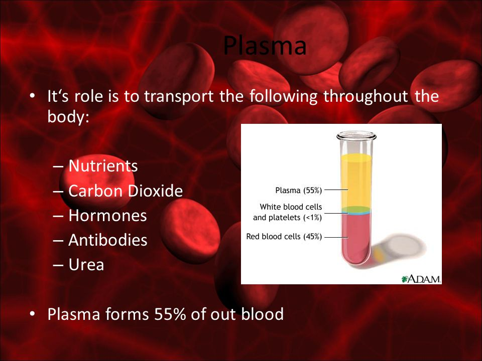 Plasma It's role is to transport the following throughout the body: – Nutrients – Carbon Dioxide – Hormones – Antibodies – Urea Plasma forms 55% of out blood