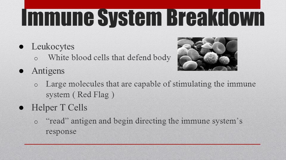 Immune System Breakdown ● Leukocytes o White blood cells that defend body ● Antigens o Large molecules that are capable of stimulating the immune system ( Red Flag ) ● Helper T Cells o read antigen and begin directing the immune system's response