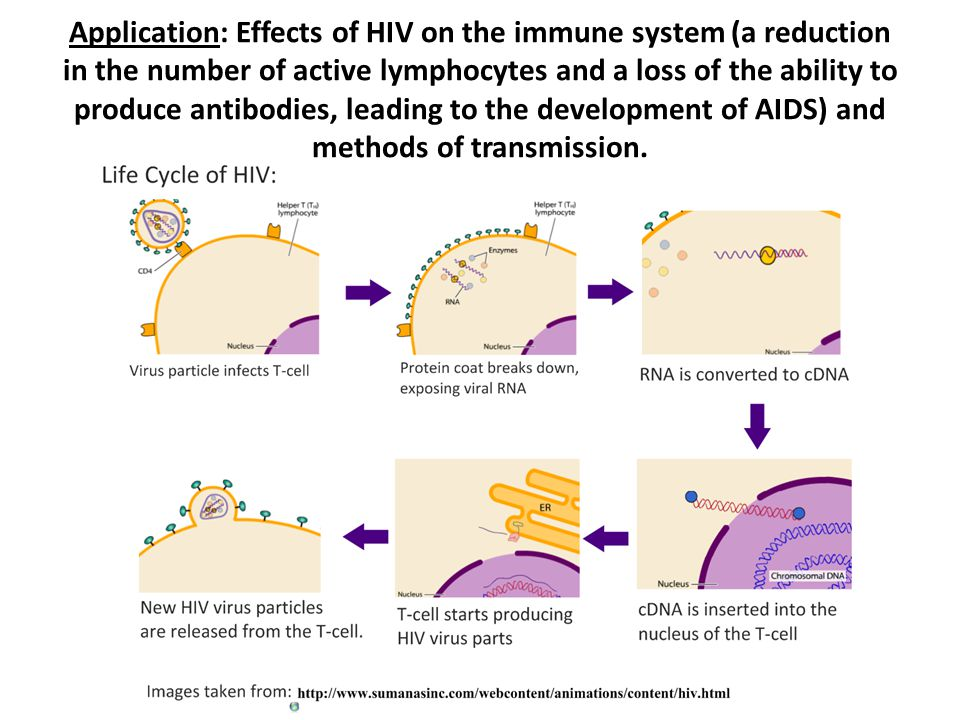 Application: Effects of HIV on the immune system (a reduction in the number of active lymphocytes and a loss of the ability to produce antibodies, lea