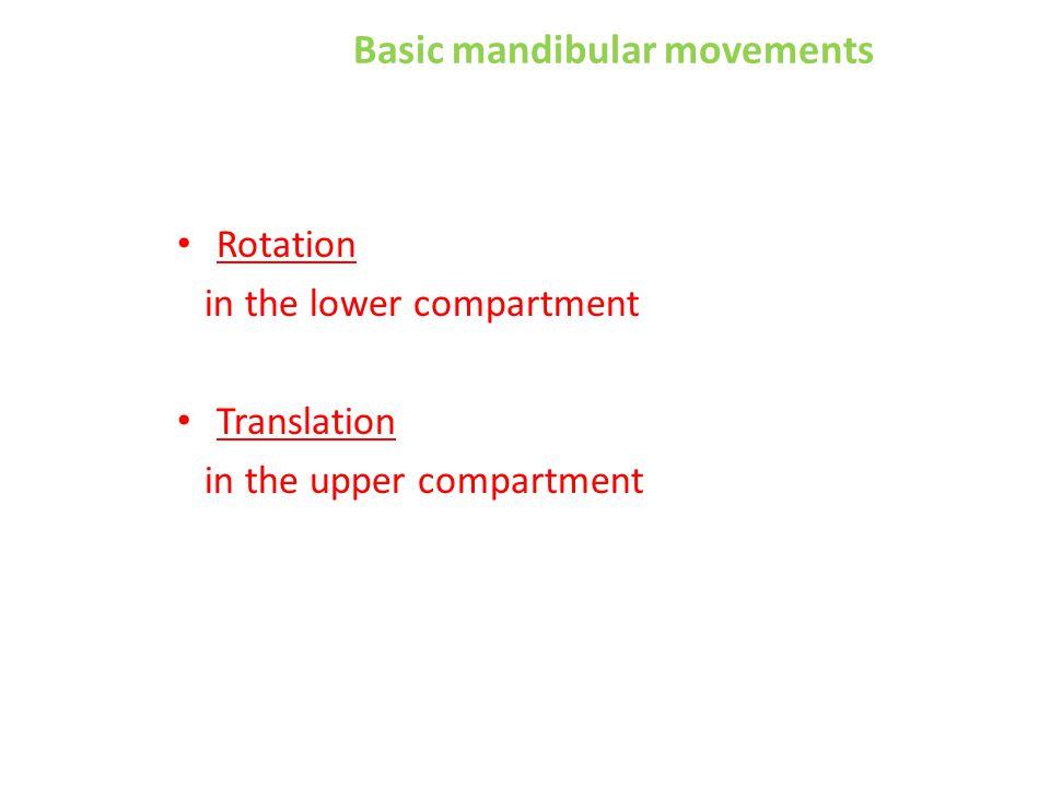 Basic mandibular movements Rotation in the lower compartment Translation in the upper compartment
