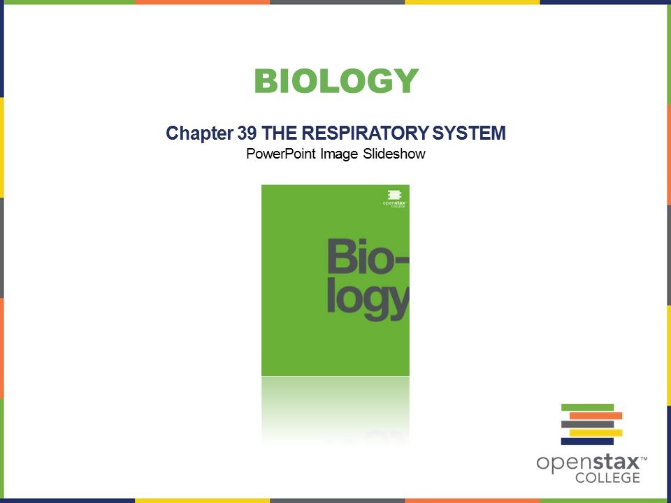 BIOLOGY Chapter 39 THE RESPIRATORY SYSTEM PowerPoint Image Slideshow