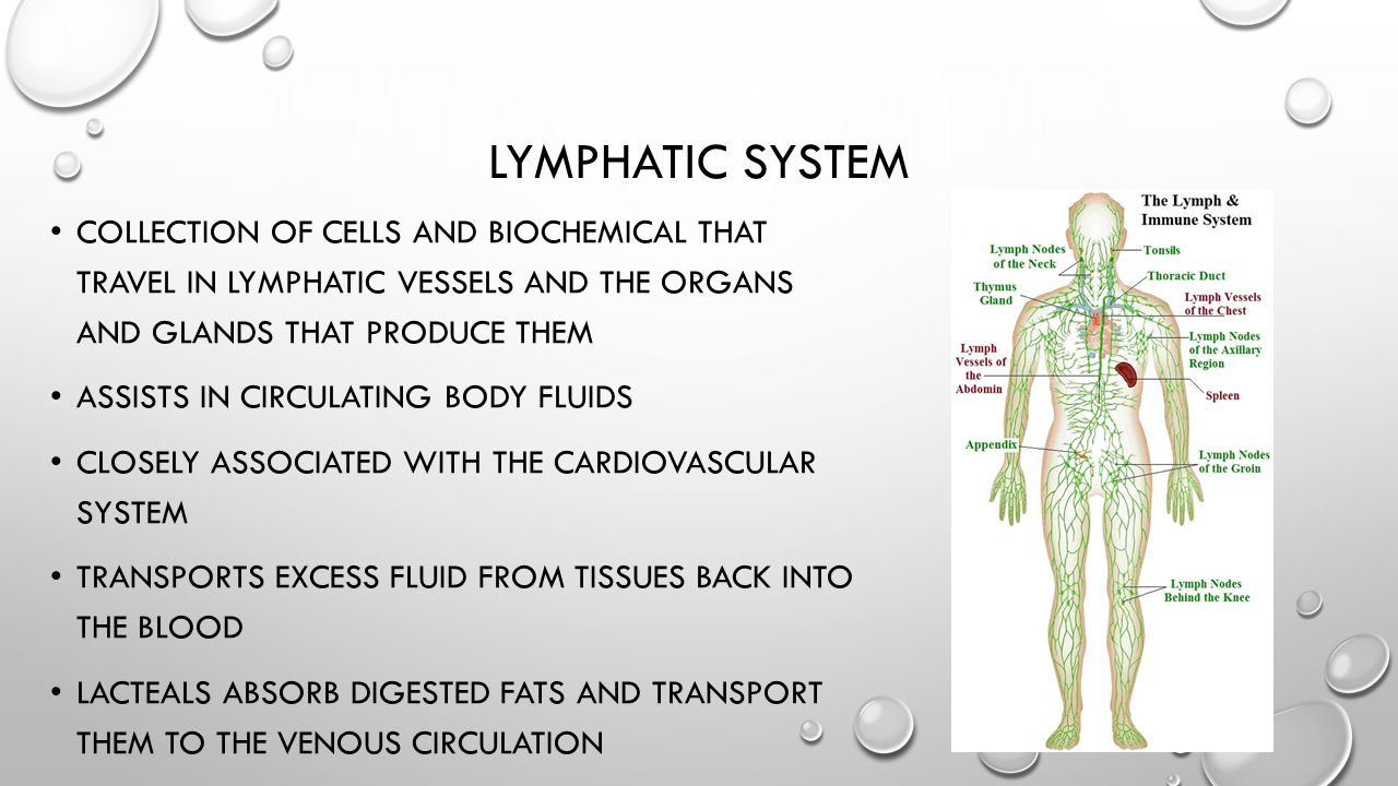 LYMPHATIC SYSTEM COLLECTION OF CELLS AND BIOCHEMICAL THAT TRAVEL IN LYMPHATIC VESSELS AND THE ORGANS AND GLANDS THAT PRODUCE THEM ASSISTS IN CIRCULATI