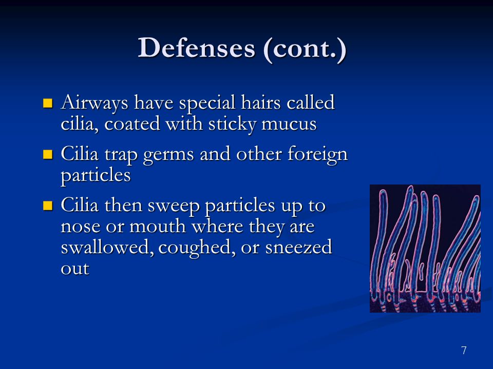 7 Defenses (cont.) Airways have special hairs called cilia, coated with sticky mucus Airways have special hairs called cilia, coated with sticky mucus Cilia trap germs and other foreign particles Cilia trap germs and other foreign particles Cilia then sweep particles up to nose or mouth where they are swallowed, coughed, or sneezed out Cilia then sweep particles up to nose or mouth where they are swallowed, coughed, or sneezed out