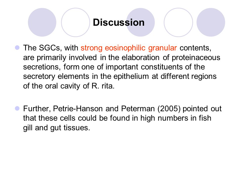 Discussion The SGCs, with strong eosinophilic granular contents, are primarily involved in the elaboration of proteinaceous secretions, form one of important constituents of the secretory elements in the epithelium at different regions of the oral cavity of R.