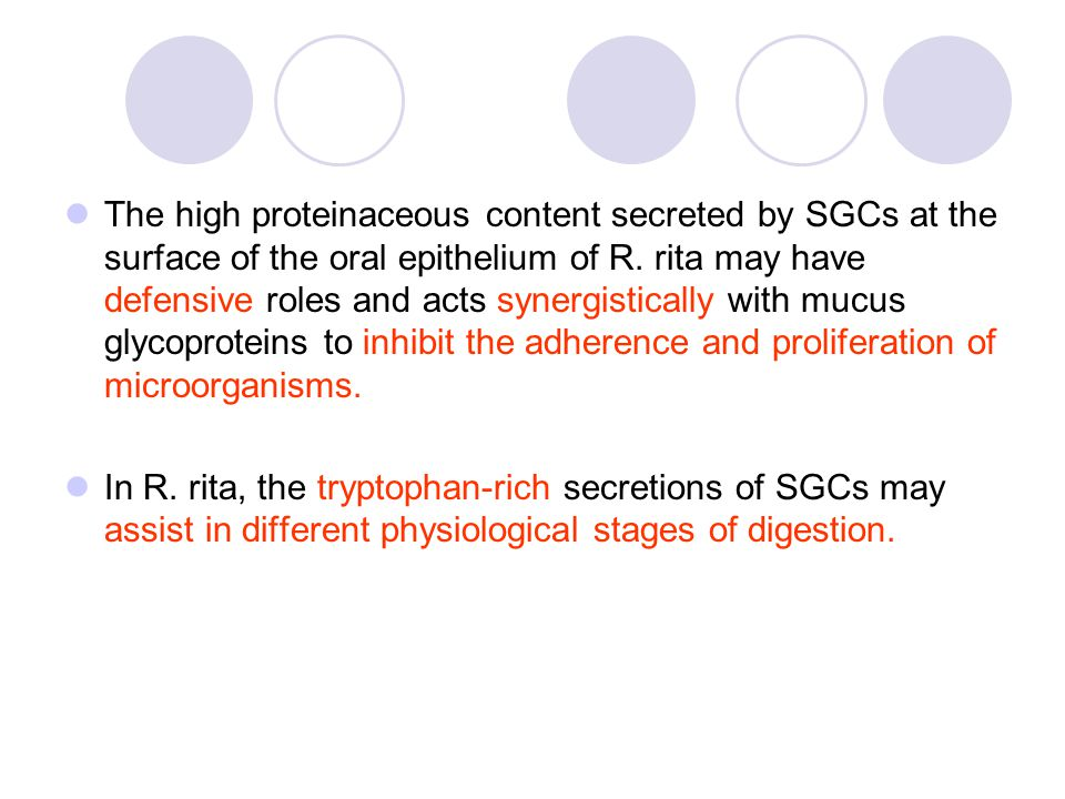 The high proteinaceous content secreted by SGCs at the surface of the oral epithelium of R.