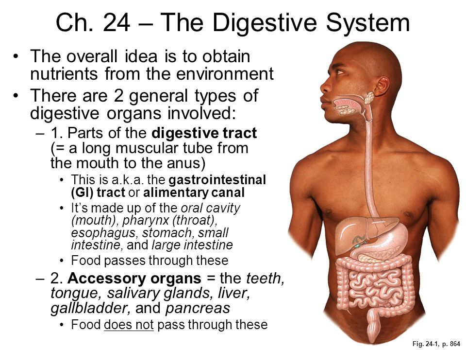 Fig. 24-1, p. 864 Ch. 24 – The Digestive System The overall idea is to obtain nutrients from the environment There are 2 general types of digestive or