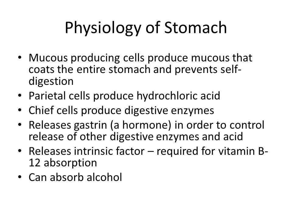 Physiology of Stomach Mucous producing cells produce mucous that coats the entire stomach and prevents self- digestion Parietal cells produce hydrochloric acid Chief cells produce digestive enzymes Releases gastrin (a hormone) in order to control release of other digestive enzymes and acid Releases intrinsic factor – required for vitamin B- 12 absorption Can absorb alcohol