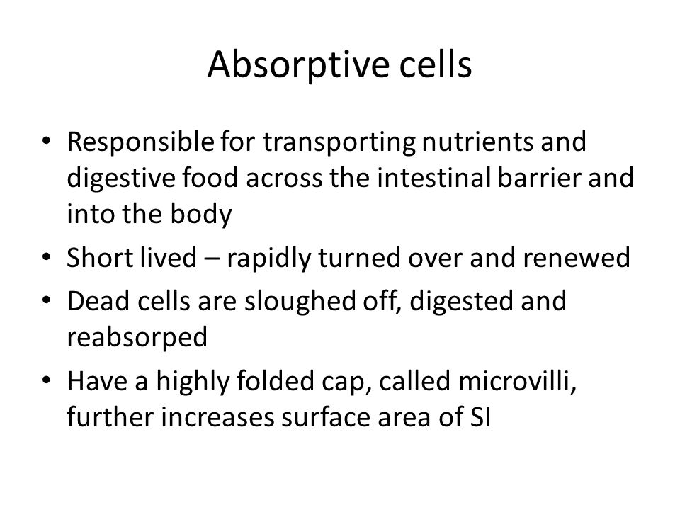 Absorptive cells Responsible for transporting nutrients and digestive food across the intestinal barrier and into the body Short lived – rapidly turned over and renewed Dead cells are sloughed off, digested and reabsorped Have a highly folded cap, called microvilli, further increases surface area of SI