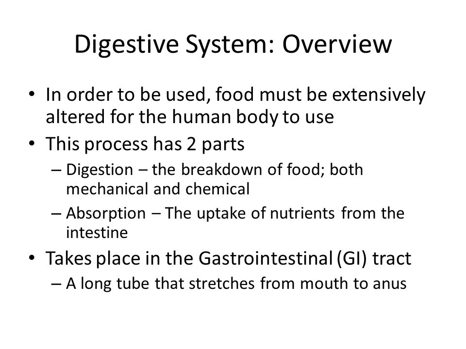 Digestive System: Overview In order to be used, food must be extensively altered for the human body to use This process has 2 parts – Digestion – the breakdown of food; both mechanical and chemical – Absorption – The uptake of nutrients from the intestine Takes place in the Gastrointestinal (GI) tract – A long tube that stretches from mouth to anus