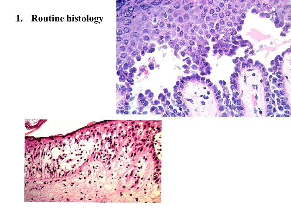 1. Routine histology