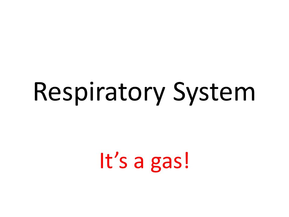 Respiratory System It's a gas!