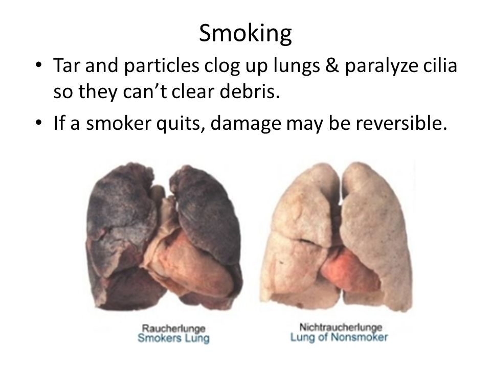 Smoking Tar and particles clog up lungs & paralyze cilia so they can't clear debris.