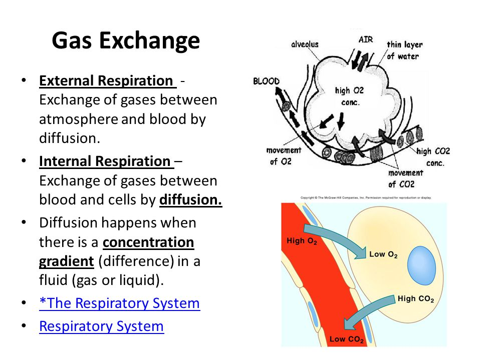 Gas Exchange External Respiration - Exchange of gases between atmosphere and blood by diffusion.