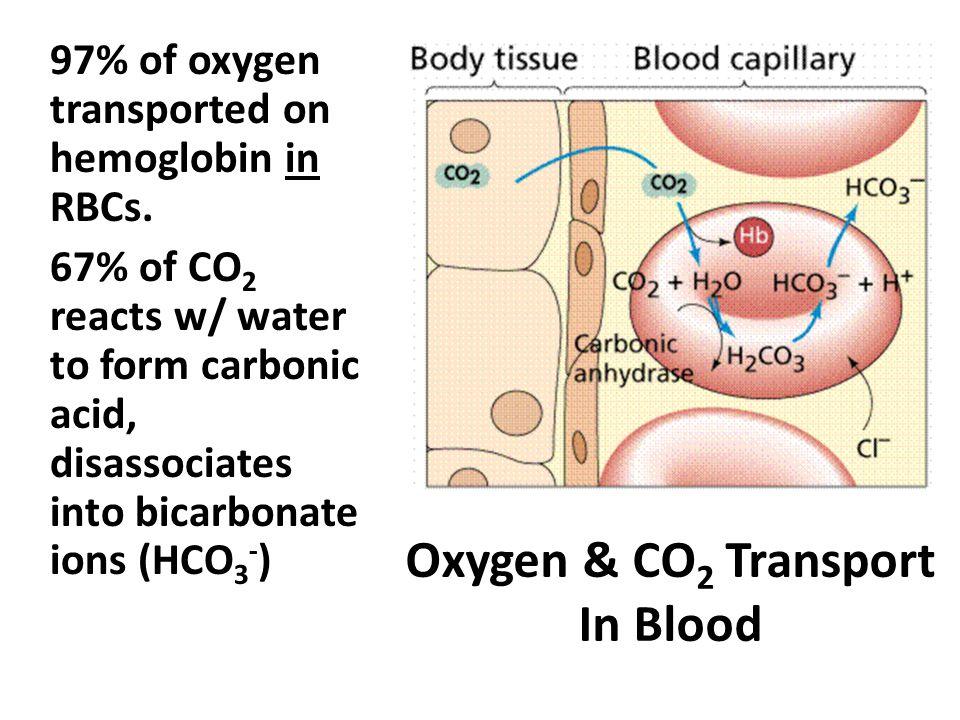 Oxygen & CO 2 Transport In Blood 97% of oxygen transported on hemoglobin in RBCs.