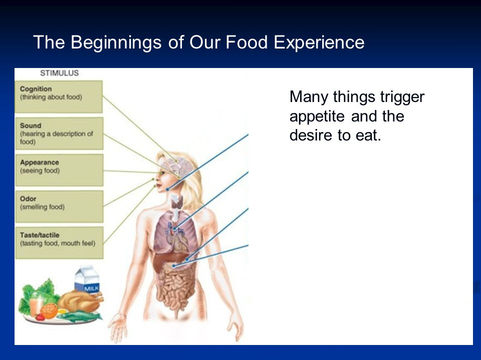 The Beginnings of Our Food Experience Increased blood flow to digestive organs Many things trigger appetite and the desire to eat.