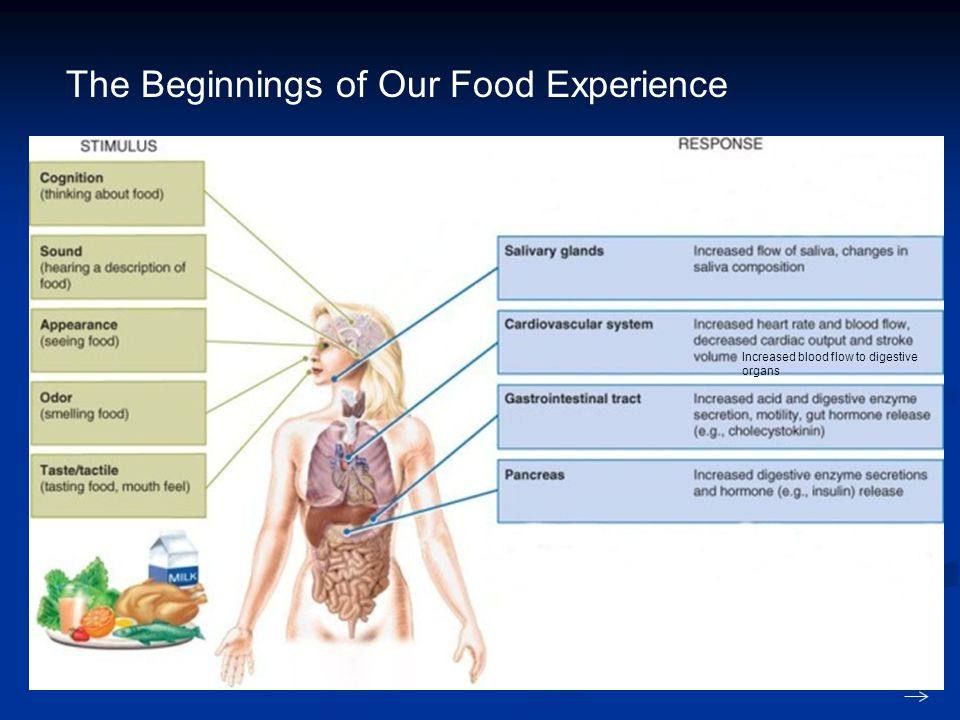 The Beginnings of Our Food Experience Increased blood flow to digestive organs