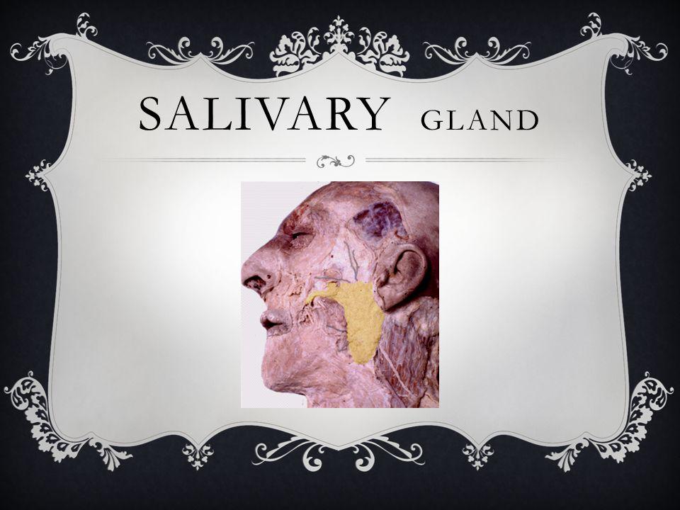 OBSTRUCTIVE SALIVARY GLAND DISORDERS  Sialolithiasis  Mucous retention/extravasation