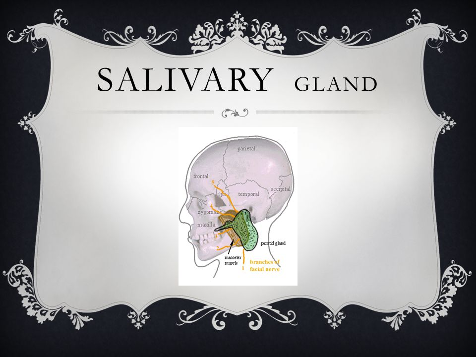IMMUNOLOGIC DISEASE SJÖGREN'S SYNDROME 7  Most common immunologic disorder associated with salivary gland disease.