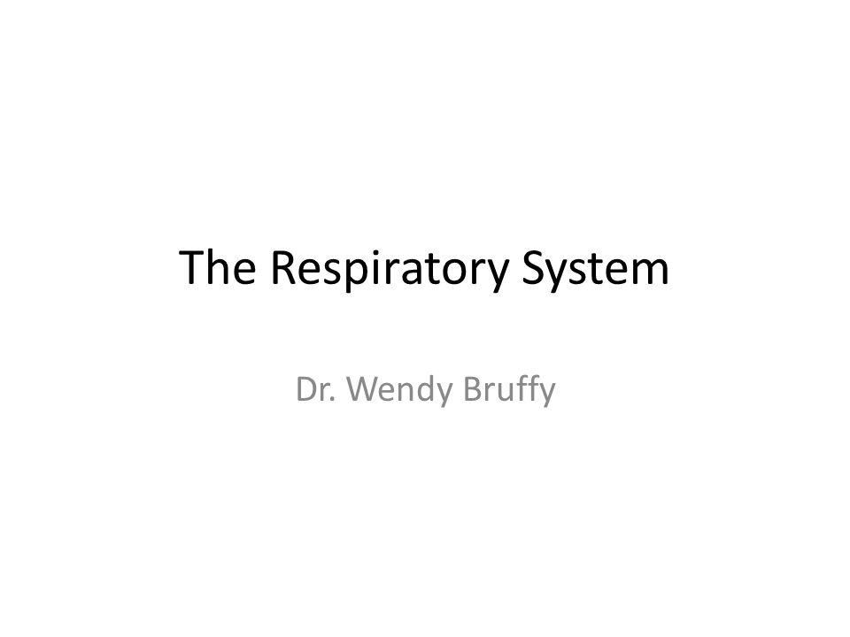 The Respiratory System Dr. Wendy Bruffy