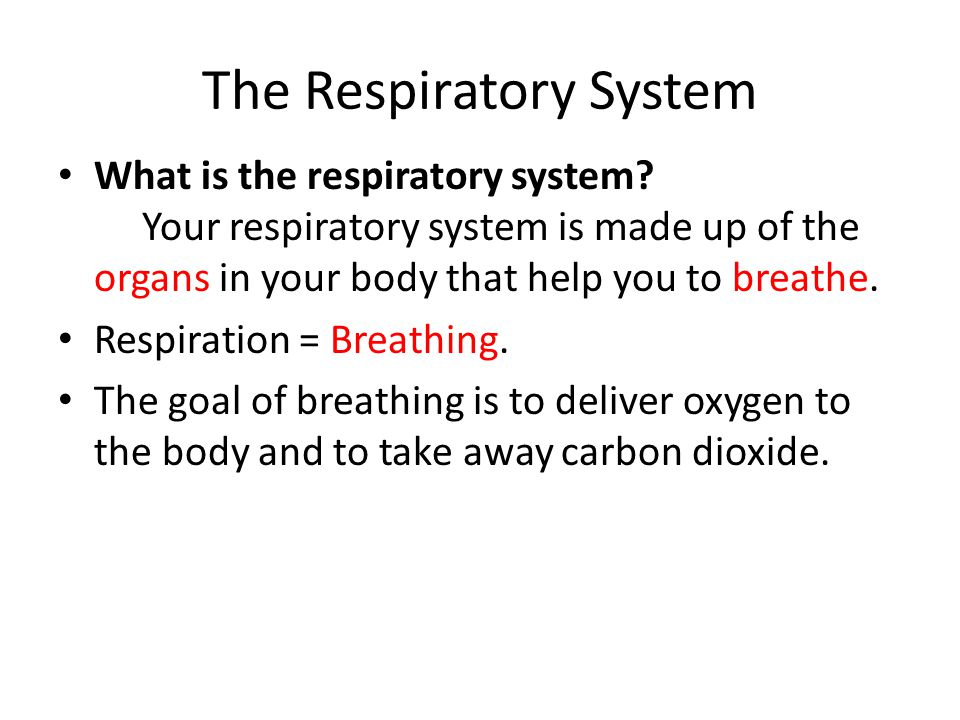 The Respiratory System What is the respiratory system? Your respiratory system is made up of the organs in your body that help you to breathe. Respira