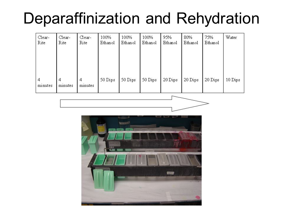 Deparaffinization and Rehydration