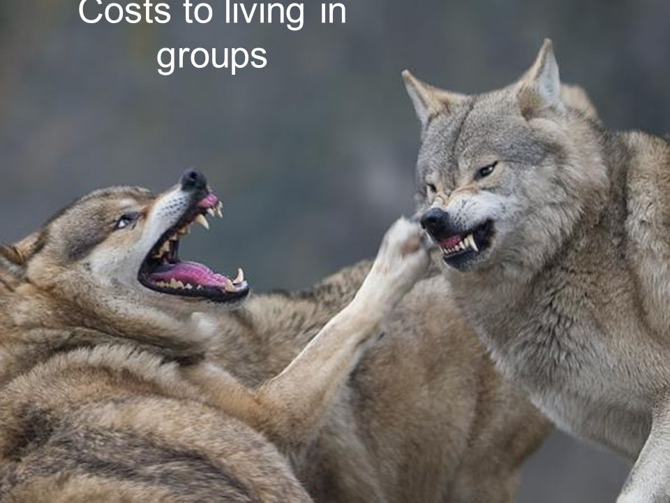 Costs to living in groups