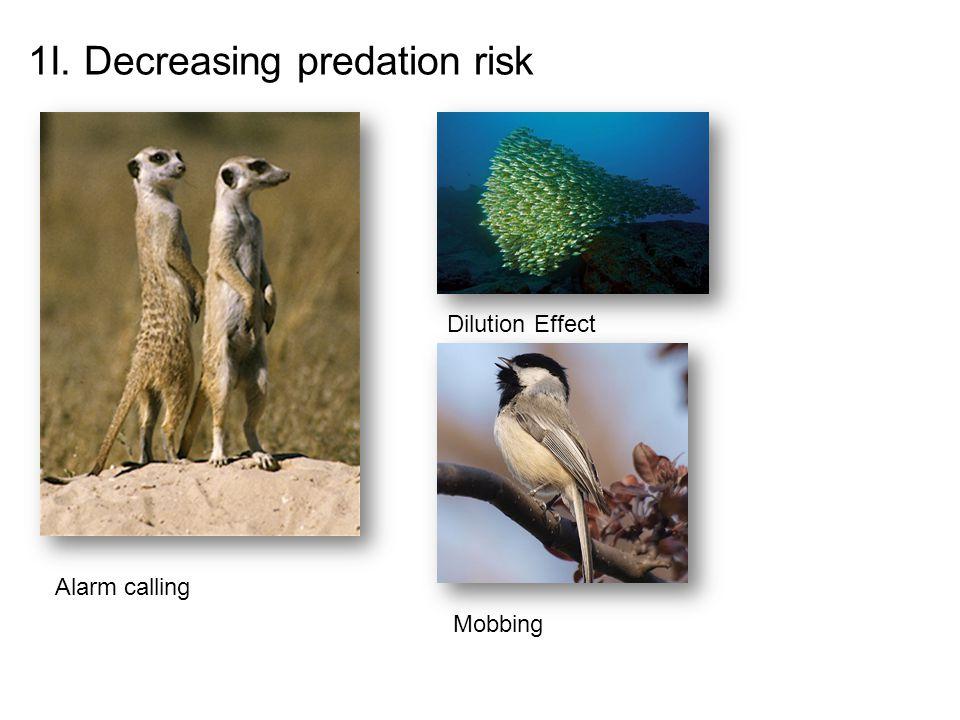 1I. Decreasing predation risk Alarm calling Dilution Effect Mobbing