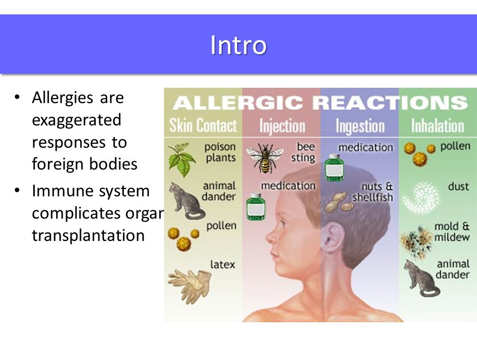 IntroIntro Allergies are exaggerated responses to foreign bodies Immune system complicates organ transplantation