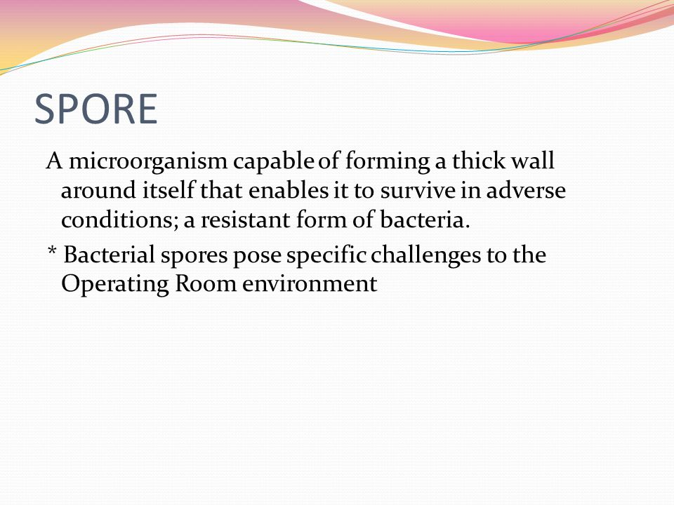 SPORE A microorganism capable of forming a thick wall around itself that enables it to survive in adverse conditions; a resistant form of bacteria. *