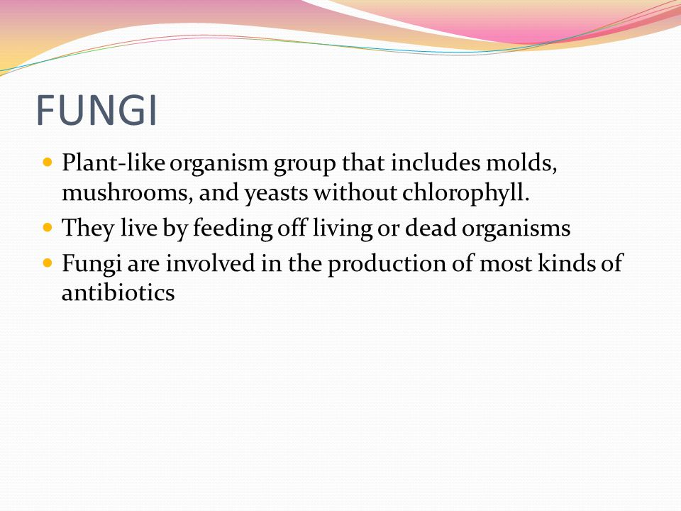 FUNGI Plant-like organism group that includes molds, mushrooms, and yeasts without chlorophyll.