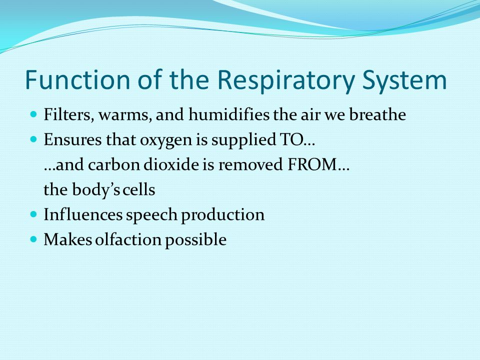 Function of the Respiratory System Filters, warms, and humidifies the air we breathe Ensures that oxygen is supplied TO… …and carbon dioxide is removed FROM… the body's cells Influences speech production Makes olfaction possible