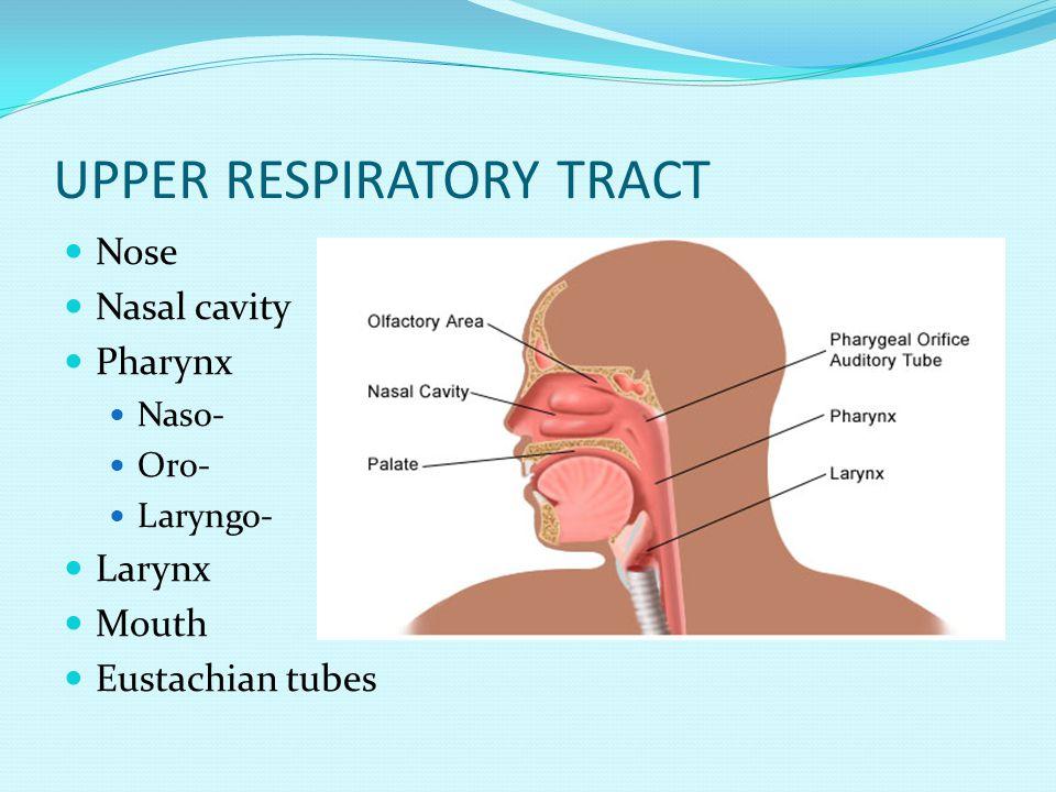 UPPER RESPIRATORY TRACT Nose Nasal cavity Pharynx Naso- Oro- Laryngo- Larynx Mouth Eustachian tubes