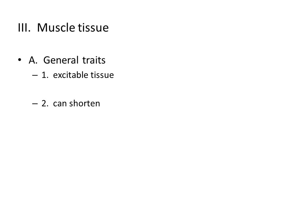 III. Muscle tissue A. General traits – 1. excitable tissue – 2. can shorten