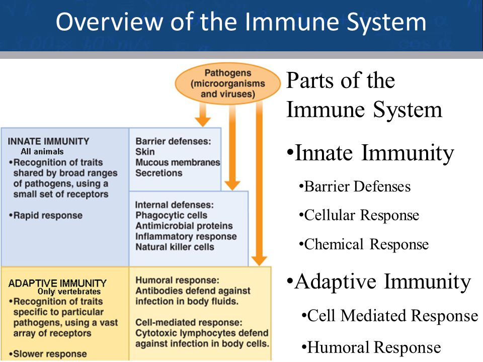 3 Overview of the Immune System Parts of the Immune System Innate Immunity Barrier Defenses Cellular Response Chemical Response Adaptive Immunity Cell