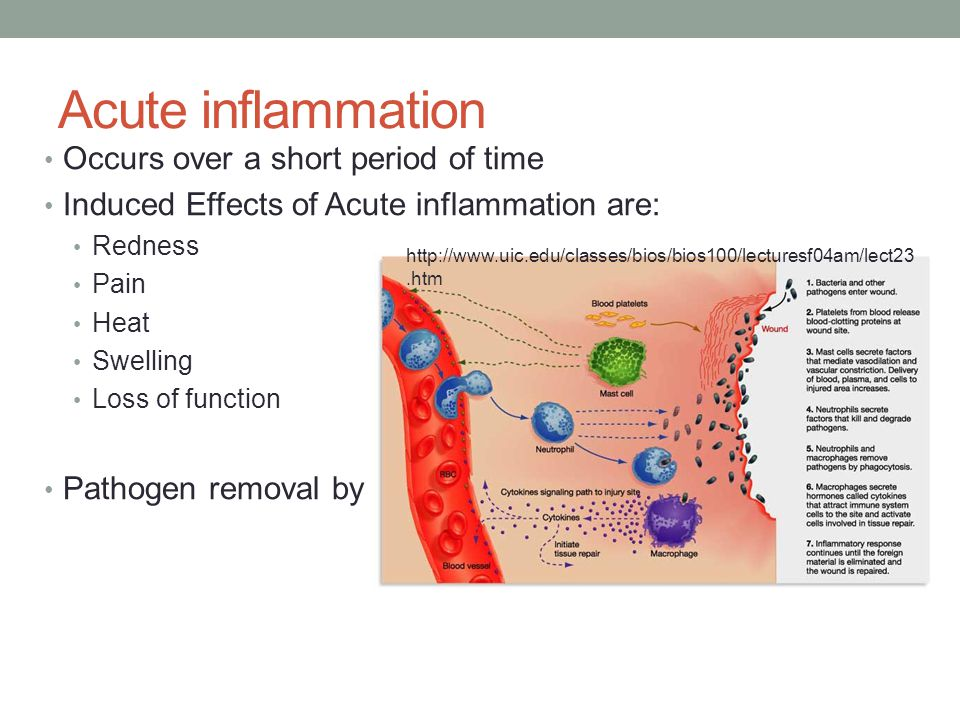 Summary Slide There are three main anatomical barrier to infections, including mechanical factors, chemical factors, and biological factors.