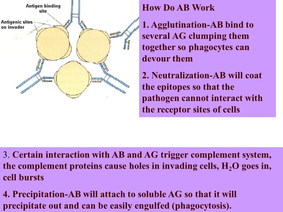How Do AB Work 1.
