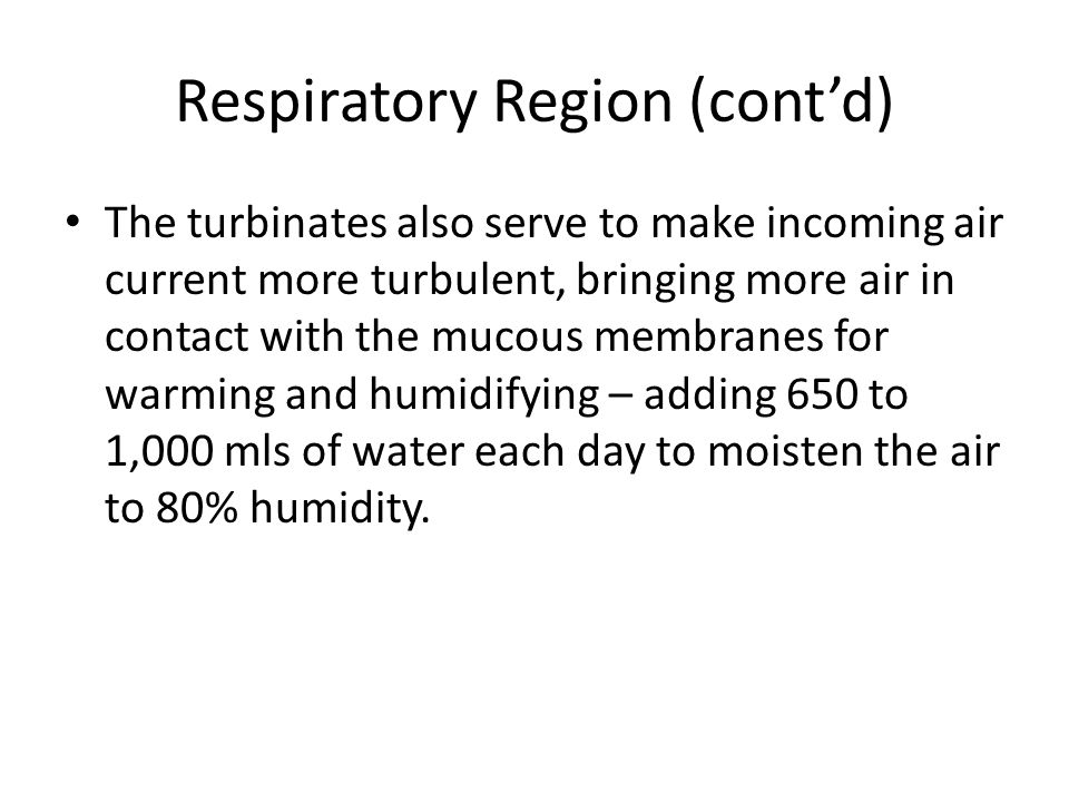 Respiratory Region (cont'd) The turbinates also serve to make incoming air current more turbulent, bringing more air in contact with the mucous membra