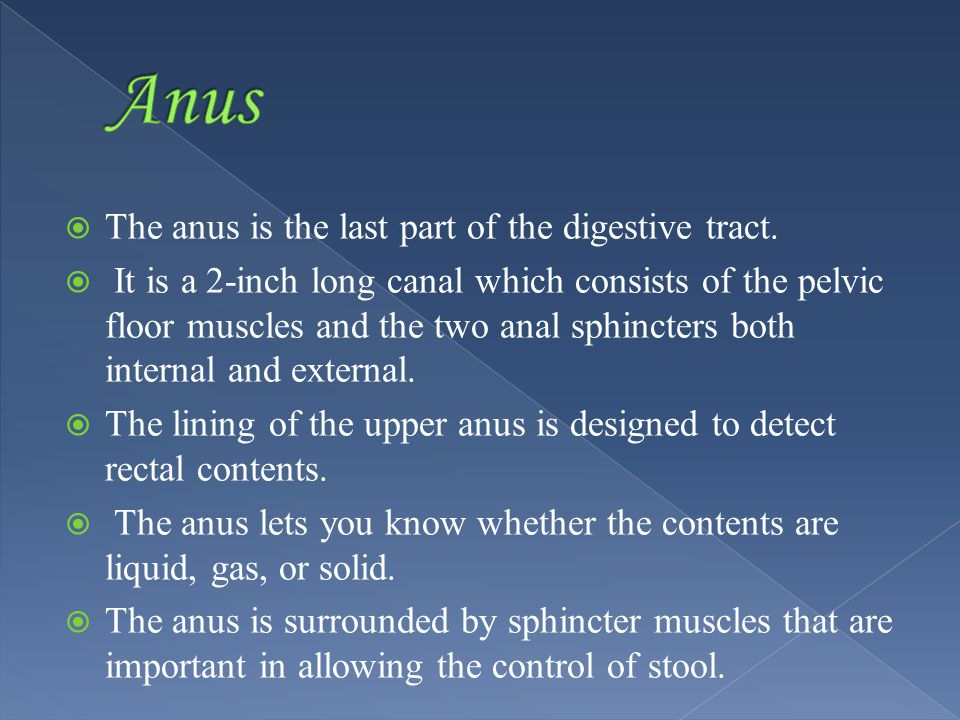 The anus is the last part of the digestive tract.
