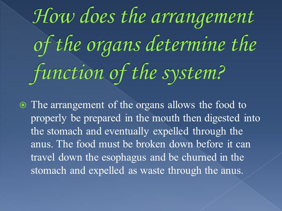  The arrangement of the organs allows the food to properly be prepared in the mouth then digested into the stomach and eventually expelled through the anus.