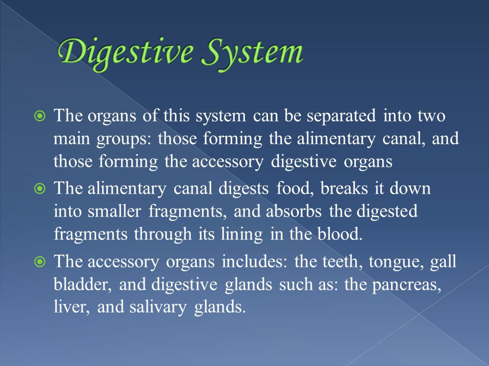  The organs of this system can be separated into two main groups: those forming the alimentary canal, and those forming the accessory digestive organs  The alimentary canal digests food, breaks it down into smaller fragments, and absorbs the digested fragments through its lining in the blood.