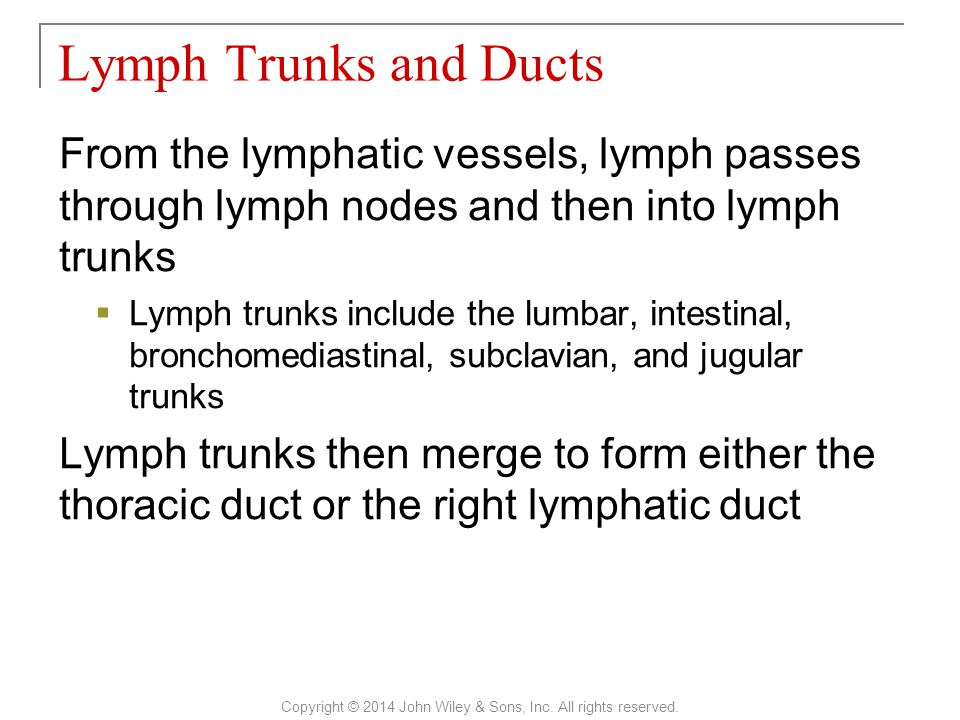 From the lymphatic vessels, lymph passes through lymph nodes and then into lymph trunks  Lymph trunks include the lumbar, intestinal, bronchomediastinal, subclavian, and jugular trunks Lymph trunks then merge to form either the thoracic duct or the right lymphatic duct Lymph Trunks and Ducts Copyright © 2014 John Wiley & Sons, Inc.