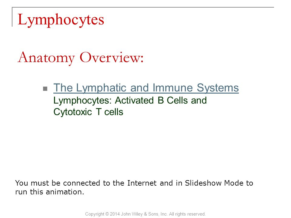 Lymphocytes Copyright © 2014 John Wiley & Sons, Inc. All rights reserved. The Lymphatic and Immune Systems Lymphocytes: Activated B Cells and Cytotoxi