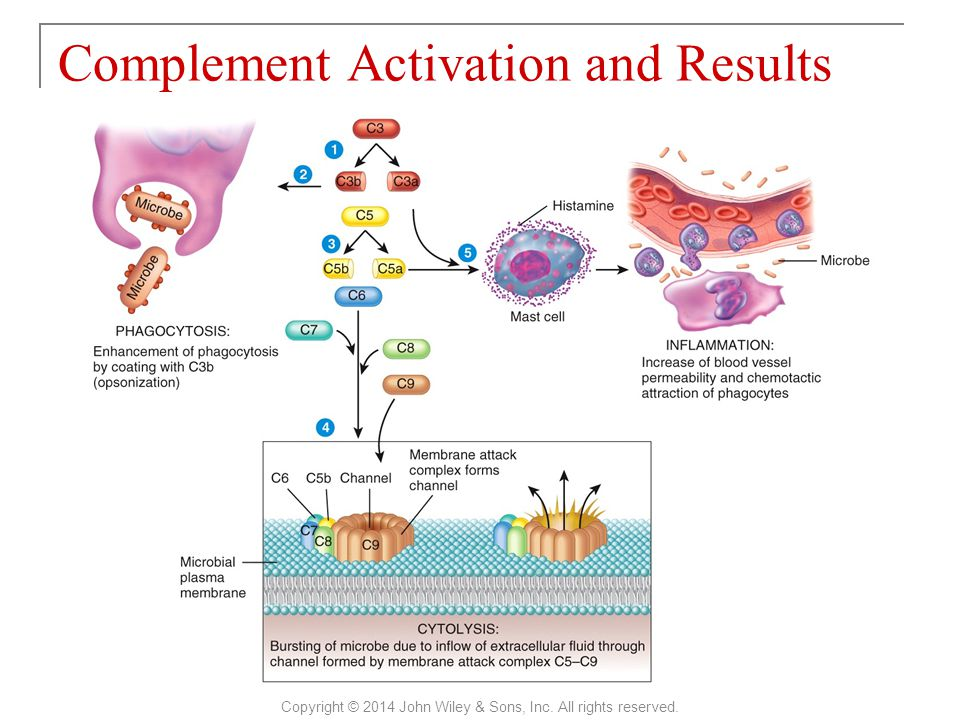Complement Activation and Results Copyright © 2014 John Wiley & Sons, Inc. All rights reserved.